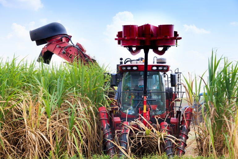 La caña de azúcar de Honduras es puro desarrollo para el país