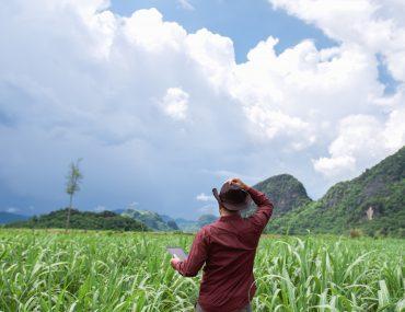 Empleo y desarrollo para Honduras, eso representa el azúcar.
